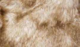 毛皮の不良品について