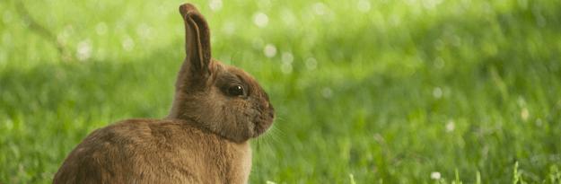 毛皮の種類について】毛皮の種類をまとめてご紹介!|毛皮買取ファン
